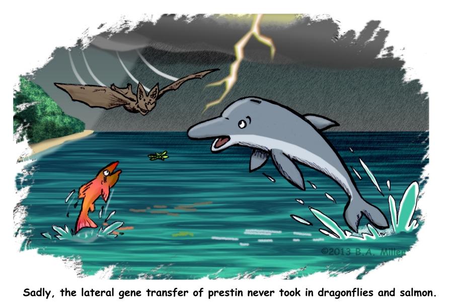 Latteral Gene Transfer